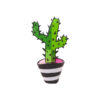 beeld cactus jacqueline schafer